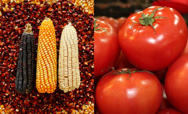 10 vegetales de origen americano que aman los europeos de10 for Imagenes de productos americanos