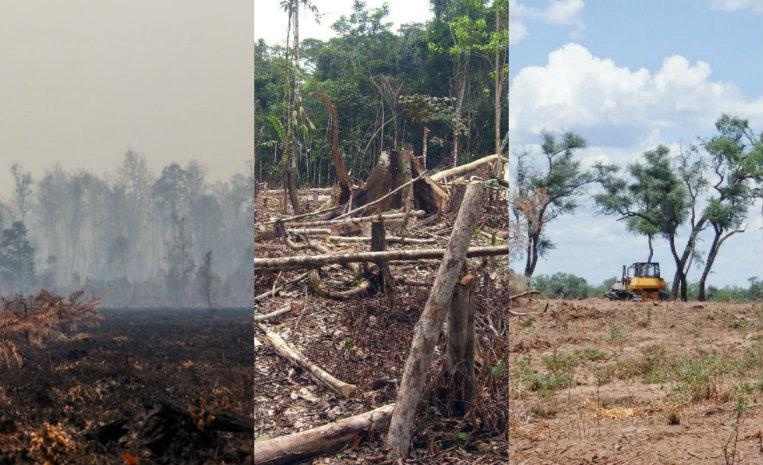 10 bosques que están a punto de desaparecer | De10