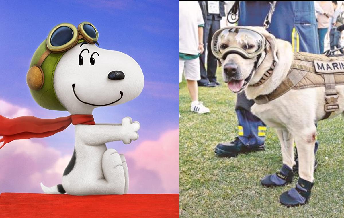 ¡Feliz Día del Perro! Los 10 perros más famosos de la historia   De10