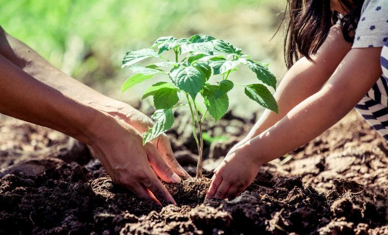10 acciones de empresas que te volverán un consumidor sustentable ...