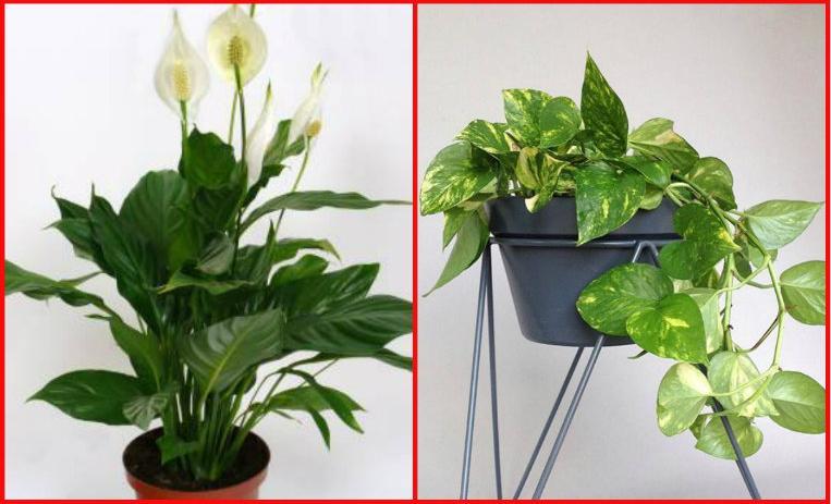 La nasa recomienda 5 plantas para purificar tu casa de10 - Plantas de interior que purifican el aire ...