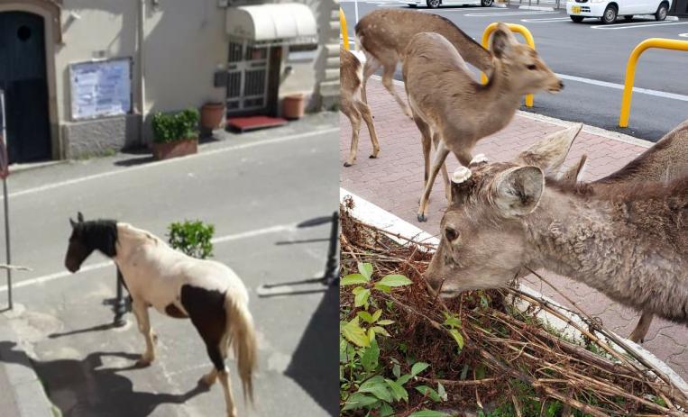 Resultado de imagen para animales en las calles en italia