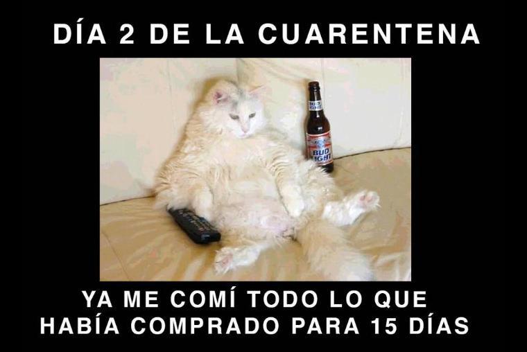 Mas De 10 Memes Para Sobrevivir A La Cuarentena Por Coronavirus De10