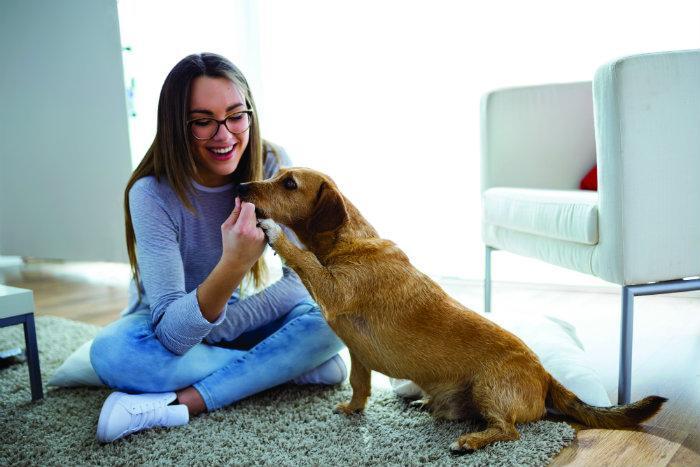 Cuida mi mascota, app, cuidado animal, perro, dueña,