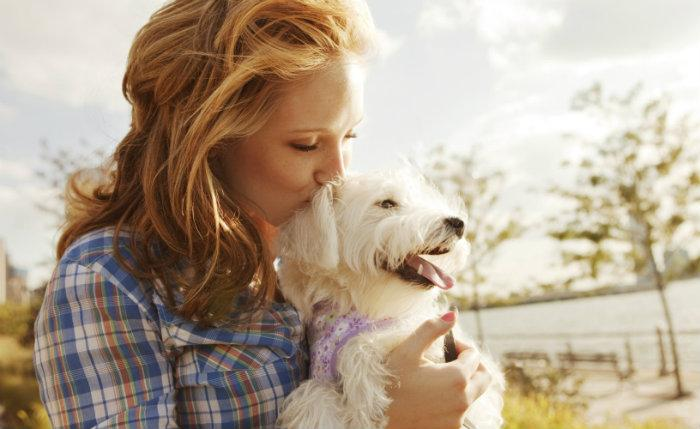 Cuida mi mascota, app, cuidado animal, perro,