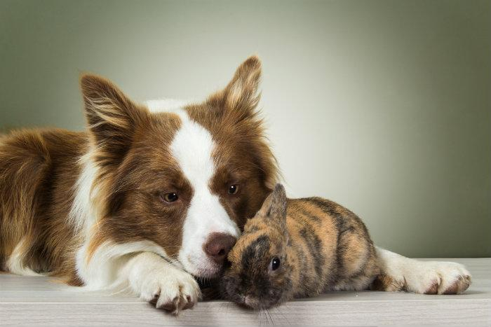 Cuida mi mascota, app, cuidado animal, perro y gato,