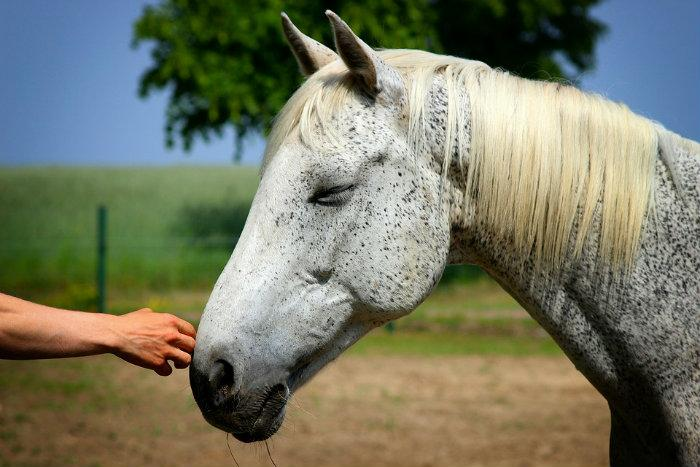 10 Derechos De Los Animales Que Debes Conocer Y Respetar De10